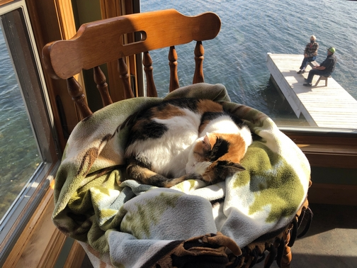 March cat at cottage