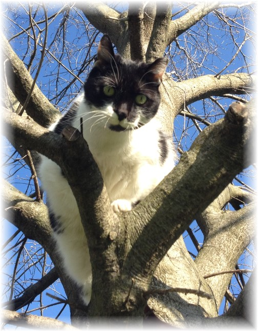Dottie in tree 4/20/14