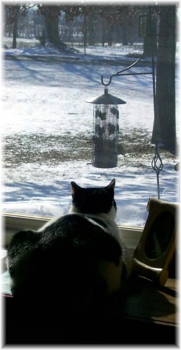 Dottie watching birds