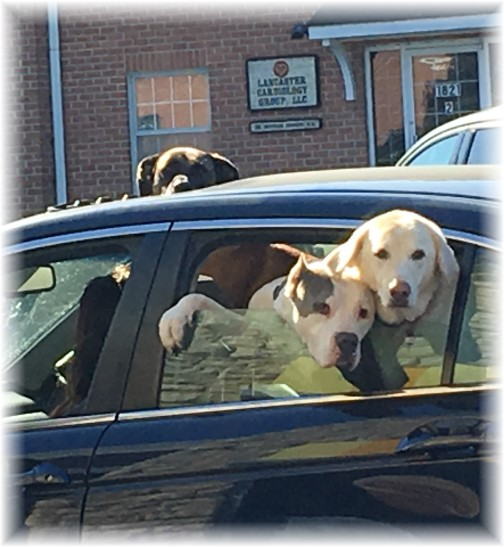Drive through dogs 10/1/17