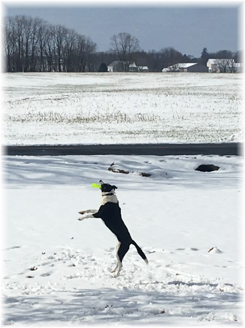 Mollie catching frisbee 2/18/18