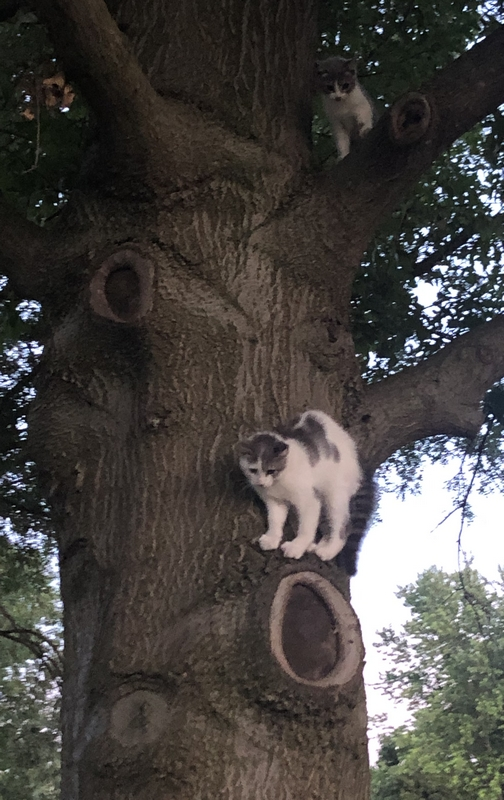 Kittens in tree