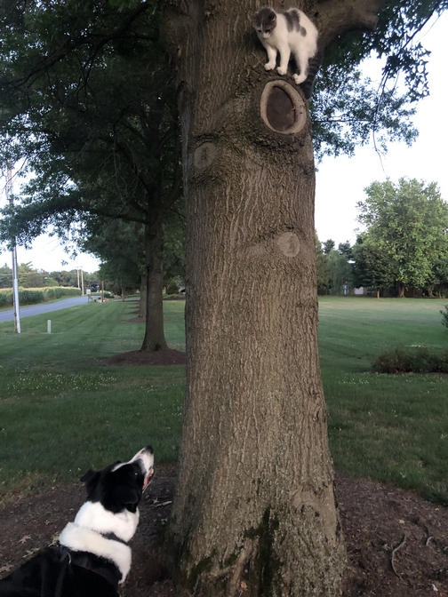 Mollie and kitten in tree