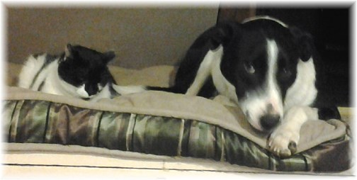 Mollie and Dottie resting together 3/17/13
