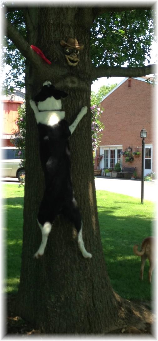 "Mollie ""climbing"" tree 7/16/15"