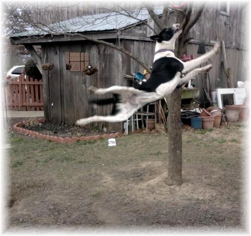Mollie jumping 3/8/12