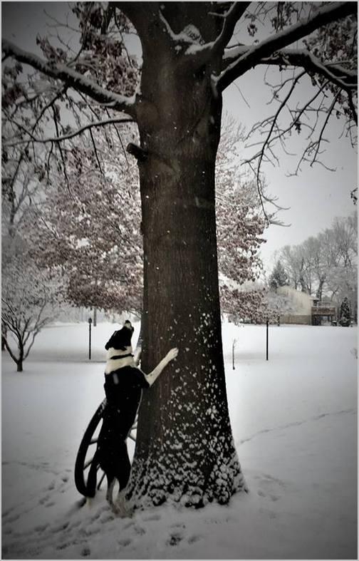 Mollie in snowstorm 1/29/19 (Ester)