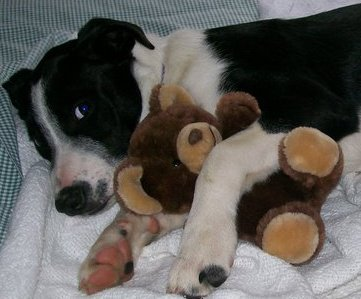 Molly with teddy bear