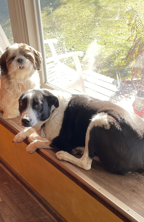 Our dogs in window sill