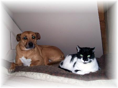 Pets after bath 12/16/09