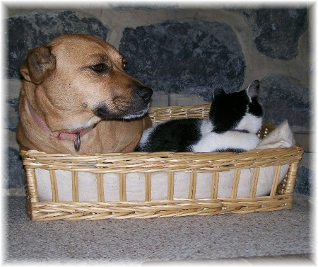 Roxie and Dottie sharing basket
