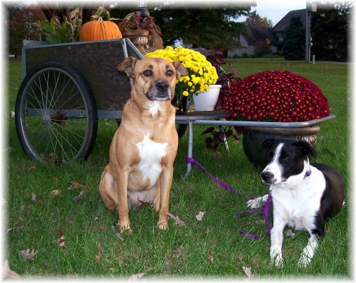 Pets in fall 2011 (photo by Ester)
