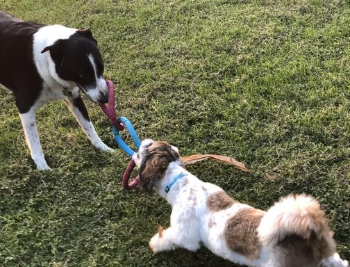 Pets playing 9/9/19
