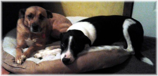 Pets sharing bed 1/1/13
