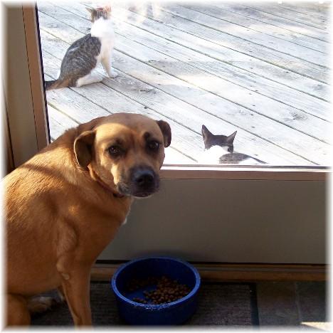 Roxie & kittens 8/10/10