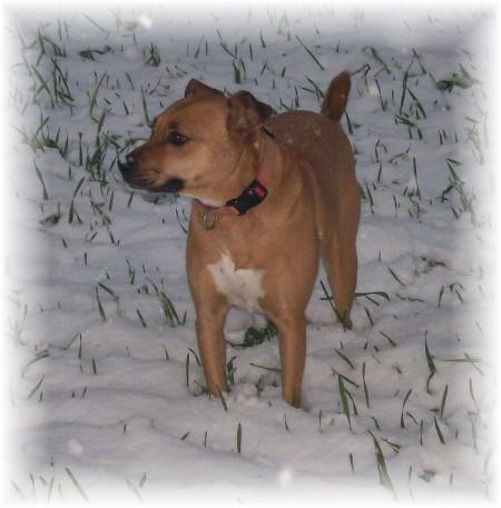 Roxie likes the snow!