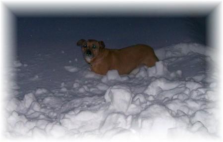 Roxie in snow 2/10/10