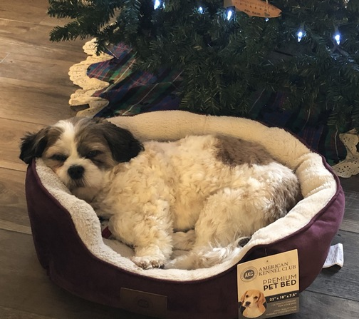 Sadie in her new Christmas bed 12/25/19