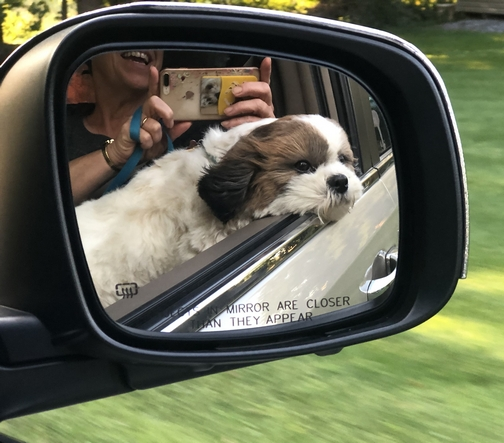 Sadie in car mirror