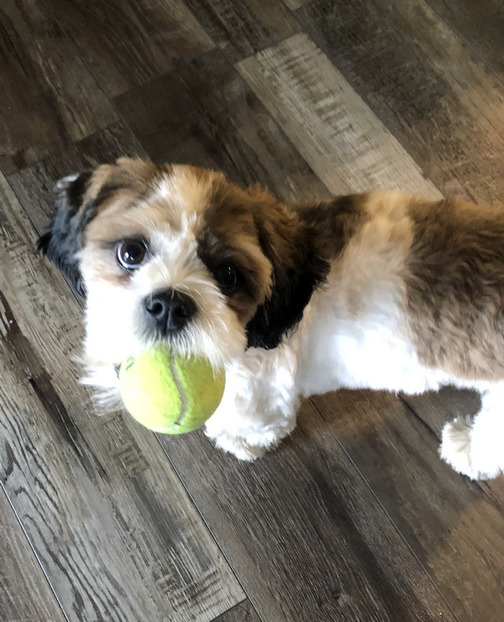 Sadie with ball