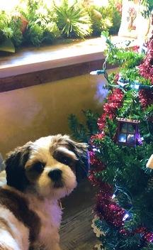 Sadie with Christmas lights