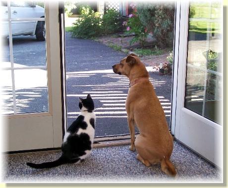 Dottie & Roxie looking out the screen door