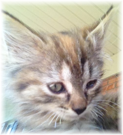 Val-Co kitten 7/1/14