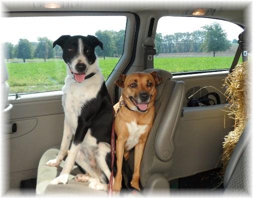Pets in van