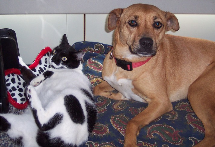 Photo of Roxie and Dottie