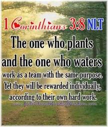 1 Corinthians 3:8
