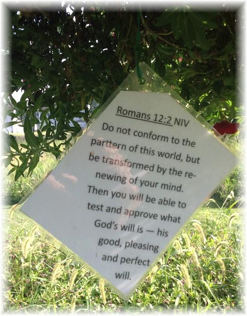 Romans 12:2 on Scripture card in Lebanon Trail Garden 8/28/15