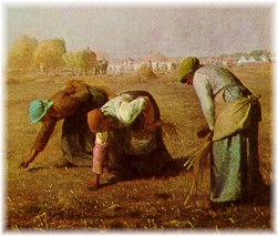 Women gleaning in field