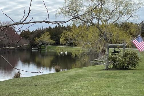Cape Cod pond