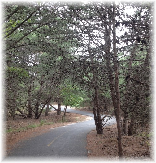 Bike trail through Cape Henlopen State Park Delaware 9/20/14