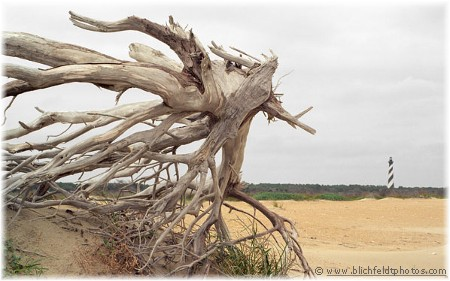 Driftwood and Cape Hatteras Lighthouse (photo by Howard Blichfeldt)