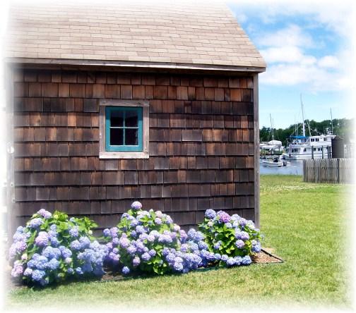 Lewes Delaware seaside shed