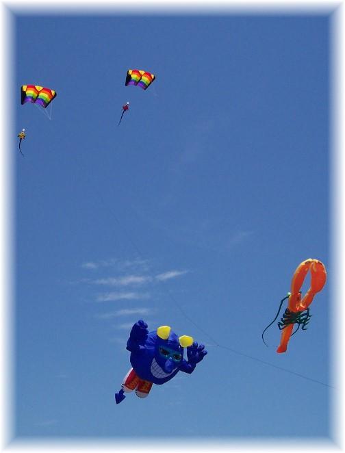 Kites in Newport, Rhode Island