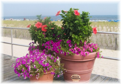 Ocean City NJ boardwalk flower planters 7/18/12