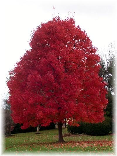 Tree in splendid color