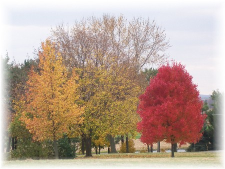 Photo of autumn trees