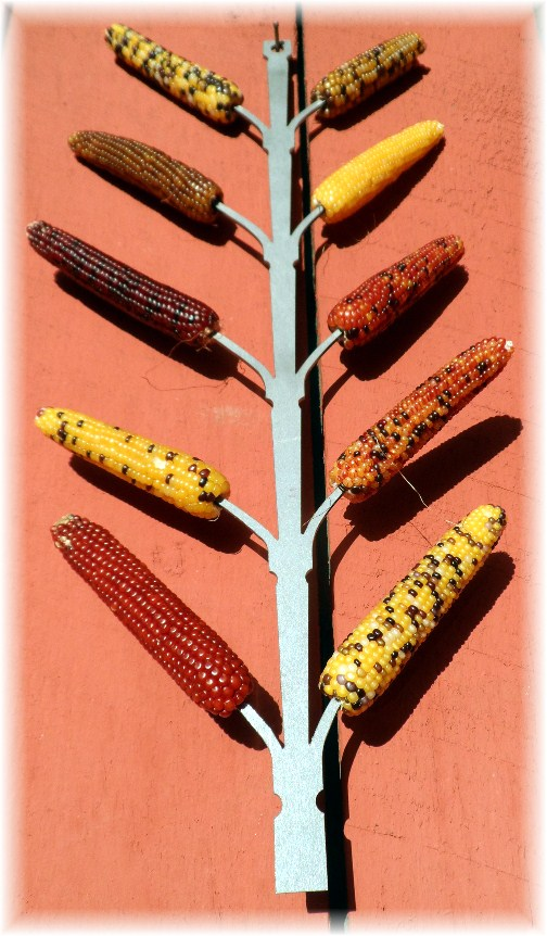 Decorative corn