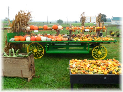 Harvest wagon on Amish farm