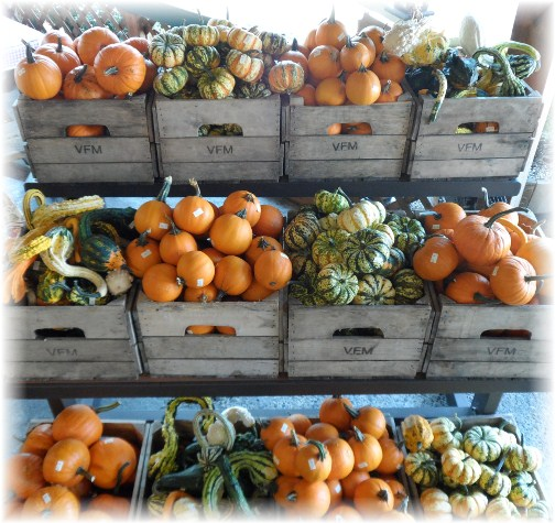 Pumpkins and gourds at the Village Farm Market