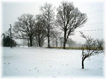 Snowy morning 3/16/07