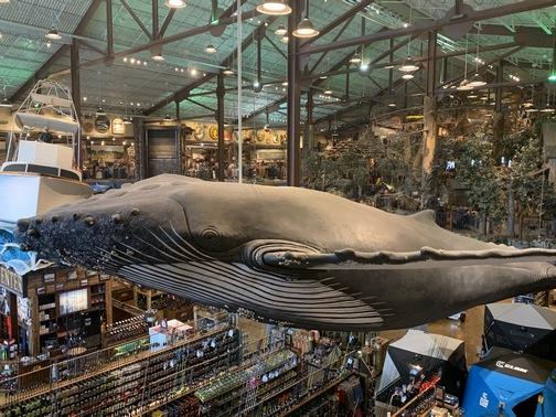 Bass Pro Shop whale at Foxborough, MA 1/25/20