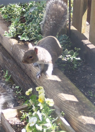 Squirrel outside our office window
