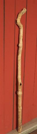 Photo of staff (walking stick)