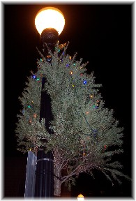 Bethlehem Christmas Tree on street lamp