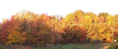 Photo of Church foliage