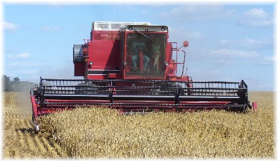 Combine at wheat harvest